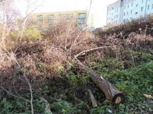 14-11-2015 powalone drzewo do usunięcia przez pana M.O.
